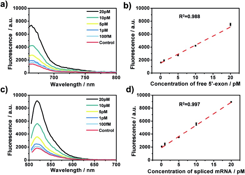 The amplified assay for quantification of the two-step RNA splicing products. (a and c) Fluorescence emission spectra in the presence of different concentrations of free 5′-exon and spliced mRNA (from top to bottom: 20 pM, 10 pM, 5 pM, 1 pM, 100 fM, and control). (b) Linear relationship between the fluorescence intensities at 660 nm and concentrations of free 5′-exon in (a). (d) Linear relationship between the fluorescence intensities at 520 nm and concentrations of spliced mRNA in (c). Error bars are based on triplicate experiments. The concentrations of padlock probe, Bst polymerase and Nb.Mva1269I were 10 nM, 5 U and 10 U, respectively.