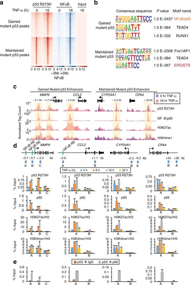 Chronic TNF-α signaling alters mutp53 and NFκB binding in colon cancer cells. a Heat maps of p53 R273H and NFκB/p65 ChIP-seq reads in SW480 cells treated with TNF-α for 0 or 16 h. Each row shows ±2 kb centered on p65 peaks, rank-ordered by the intensity of mutp53 and NFκB/p65 peaks and grouped by gained versus maintained mutp53 peaks. b De novo motif analyses of the TNF-gained and maintained mutp53 overlapping NFκB/p65 binding sites as noted in ( a ). c UCSC genome browser tracks of ChIP-seq signals for p53 R273H, NFκB/p65, H3K27ac, and H3K4me1 at the MMP9 , CCL2 , CYP24A1 , and CPA4 gene loci in untreated (purple) or TNF-α 16 h (pink)-treated SW480 cells. The y axis depicts the ChIP-seq signal and the x axis locates the genomic position with the enhancer regions highlighted in yellow. d Schematics of ChIP-qPCR amplicons and ChIP analyses with the indicated antibodies at the enhancers and non-specific regions of MMP9 , CCL2 , CYP24A1 , and CPA4 gene loci. ChIP-qPCR amplicons were designed to amplify the enhancer (A and B at MMP9 and A at CCL2 , CYP24A1 , and CPA4 ) or non-specific (C at MMP9 and B at CCL2 , CYP24A1 , and CPA4 ) regions of the target gene loci. ChIP experiments were performed using SW480 cells treated with TNF-α for 0, 8, 16, and 32 h. ChIPs for histone marks were normalized to H3. An average of two independent ChIP experiments that are representative of at least three is shown with error bars denoting the standard error. e Sequential ChIP (re-ChIP) with p53 antibody followed by IgG (control) and NFκB/p65 antibody performed in SW480 cells treated with TNF-α for 16 h. The ChIP-qPCR amplicons are identical to those used in ( d ). An average of two independent re-ChIP experiments that are representative of at least three is shown with error bars denoting the standard error