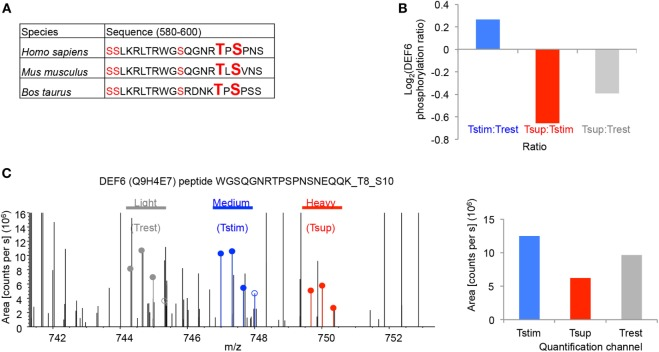 Tregs suppress T595_S597 phosphorylation of DEF6 in responder Tcons. (A) The peptide sequences of DEF6 containing the conserved phosphosites in respective organisms are shown. Ser (S) and Thr (T) with detected phosphorylation in ≥2/3 donors are highlighted in red. Phosphosites of interest (T595 and S597) are additionally highlighted in big letters. (B) log 2 of average ratio of T595_S597 phosphorylated DEF6 peptide in the given comparisons. (C) Representative FTMS spectrum of the indicated DEF6 phosphopeptide (phospho-T595_S597). Precursor areas of the three indicated samples are depicted. Shown is the spectrum from Donor 3 (from one out of three technical replicate mass spectrometry runs) representative of three donors, with following properties: quantified Ion: z = +3, Mono m / z = 744.31616 Da, and MH+ = 2,230.93393 Da. Filled circles are isotope pattern peaks used in calculating the quantification values for the different quantification channels, as opposed to unfilled circles. The bar chart (right) shows quantification of the respective spectrum.
