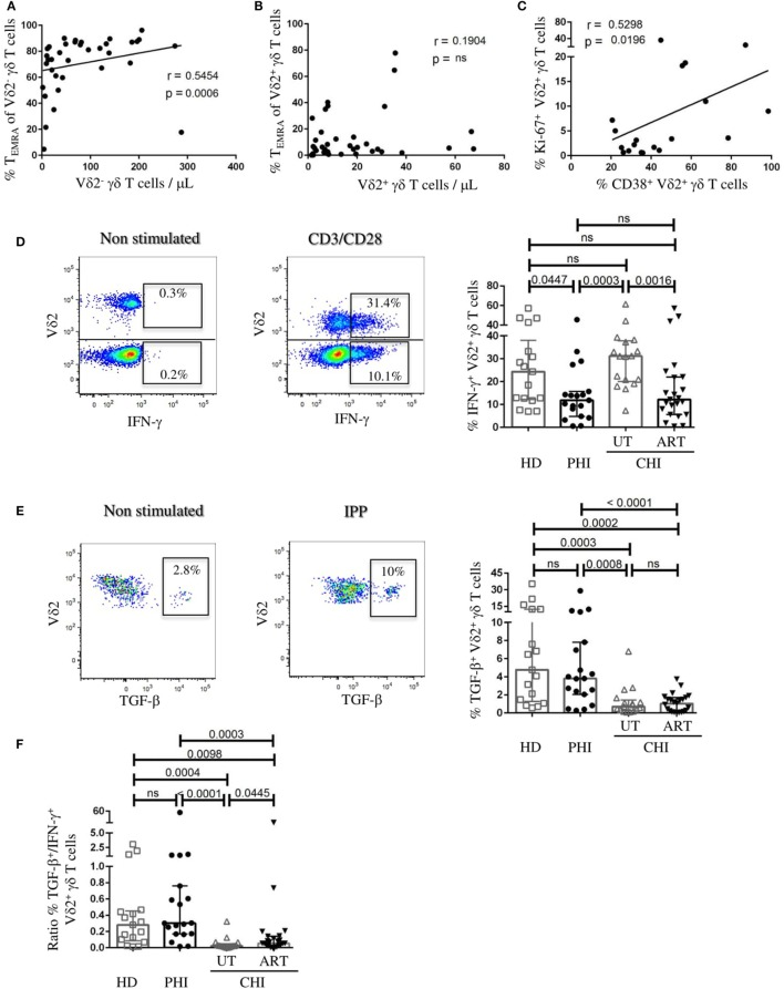 Vδ2 + γδ T cells exhibit anti-inflammatory cytokine profile in primary HIV infection (PHI). (A) Correlation analyses in viremic patients (A) between absolute numbers of Vδ2 − γδ T cells and the proportion of CD45RA + CD27 − (T EMRA ) Vδ2 − γδ T cells, and (B) between Vδ2 + γδ T cells and the proportion of CD45RA + CD27 − (T EMRA ) Vδ2 + γδ T cells. (C) Relationship between the frequency of Ki-67 + Vδ2 + γδ T cells and the proportion of CD38 + Vδ2 + γδ T cells in PHI patients. (D) Representative FACS staining of IFN-γ production by Vδ2 + and Vδ2 − γδ T cells from a UT-CHI patient with or without CD3/CD28 stimulation for 24 h. Comparison of frequencies of IFN-γ + Vδ2 + γδ T cells between healthy donors (HD), and patients with primary HIV infection (PHI) as well as chronic HIV infection (CHI)—untreated (UT) and treated with ART (ART). (E) Representative FACS staining of TGF-β production by Vδ2 + γδ T cells from a PHI patient with or without 4 days of isopentenyl pyrophosphate (IPP) stimulation. Comparison of frequencies of TGF-β + Vδ2 + γδ T cells between HD, PHI, UT-CHI, and ART-CHI. (F) Comparison of the ratio of frequencies of TGF-β + /IFN-γ + Vδ2 + γδ T cells between HD, PHI, UT-CHI, and ART-CHI. Data are displayed as median and IQR. Mann–Whitney and Spearman rank correlation tests were performed. Spearman rank correlation coefficients ( r ) are indicated in the panels. p -Values are indicated as significant when