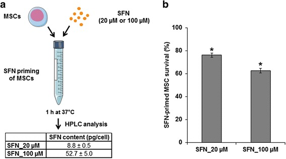 SFN content in primed MSCs and control of their viability. a Determination of the SFN content of primed MSCs. MSCs were incubated for 1 h at 37 °C with SFN (20 μM or 100 μM). After washing with HBSS, the SFN content of the cell pellet was determined by HPLC. b Determination of the viability of SFN-primed MSCs. MSCs were incubated for 1 h at 37 °C with or without SFN (20 μM or 100 μM). After washing with HBSS, cells were seeded in a 96-well plate. Cell survival was estimated after 24 h, with the CyQUANT® cell proliferation assay kit. The results obtained for unprimed MSCs were considered to correspond to 100% survival. Data are expressed as the mean of three independent experiments ± SEM. Asterisks (*) indicate significant differences from unprimed MSCs ( p