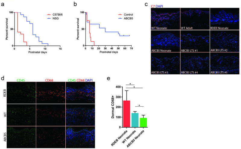Immunomodulation alleviates RDEB pathology ( a ) Survival of Col7a1 −/− NSG (n=15) and immune-competent C57BL/6 (n=10) mice, created by CRISPR/Cas9 embryo injection ( P