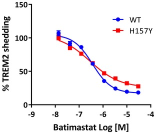 Titration of batimastat against WT and H157Y TREM 2 shedding The concentration of batimastat in the culture medium of HEK293 cells expressing either WT or H157Y TREM2 (with hDAP12) was varied over 4.5 orders of magnitude and shed TREM2 quantified bt MSD assay 24 h later. More batimastat‐resistant shedding of the variant TREM2 is apparent at higher inhibitor concentrations as compared to the WT protein. Data plotted as mean ± SEM.