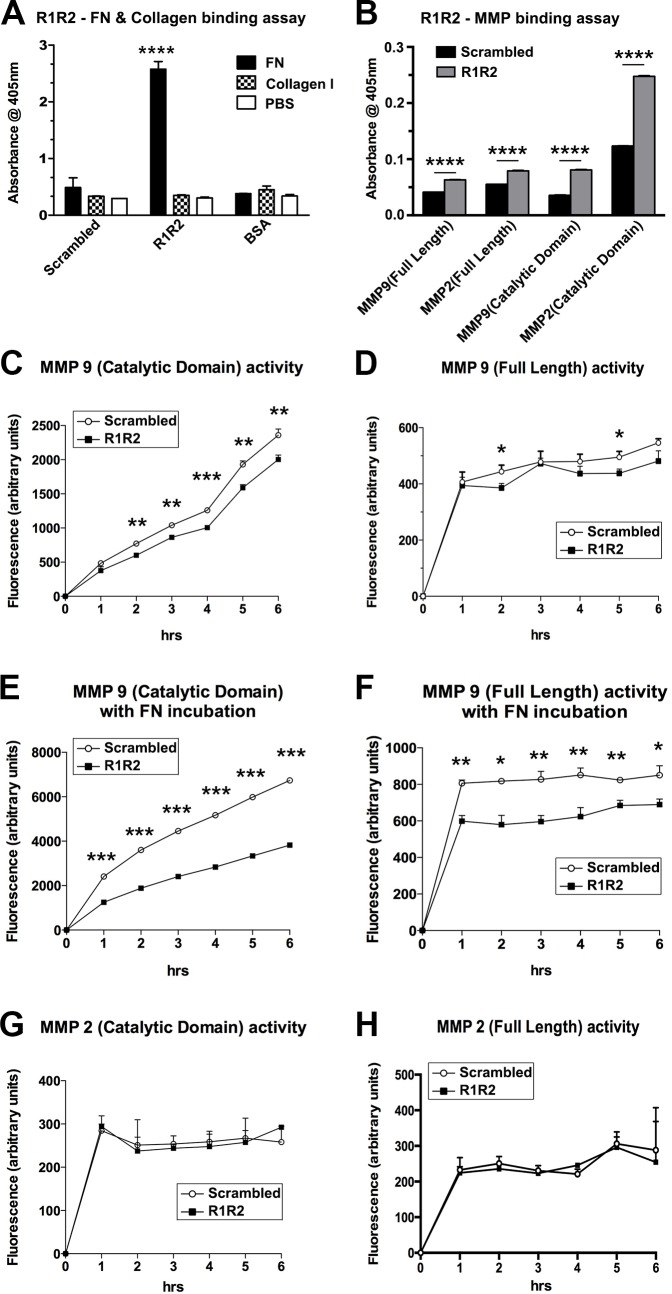 R1R2 disables the proteolytic activity of MMP-9. (A) Equal amounts of R1R2, the scrambled peptide, or bovine serum albumin (BSA; 20 μg/mL) were coated onto 96-well plates; fibronectin (FN), collagen (Col), or phosphate-buffered saline (PBS) were added into the wells, and the interaction between the peptides was evaluated by measuring the absorbance at 405 nm. **** P