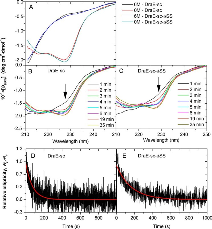 Kinetics of DraE-sc and DraE-sc-ΔSS refolding. A , far-UV CD spectra of both protein variants in their native (0 m ) and denatured (6 m GdmCl) state. B and C , protein refolding monitored at the respective time by the shape of far-UV CD spectra, initiated by 100-fold dilution of initial solutions of proteins in 6 m GdmCl. D and E , changes in relative ellipticity measured at 227 nm during the refolding experiments. Red lines denote the fitted first rate kinetic exponential function.