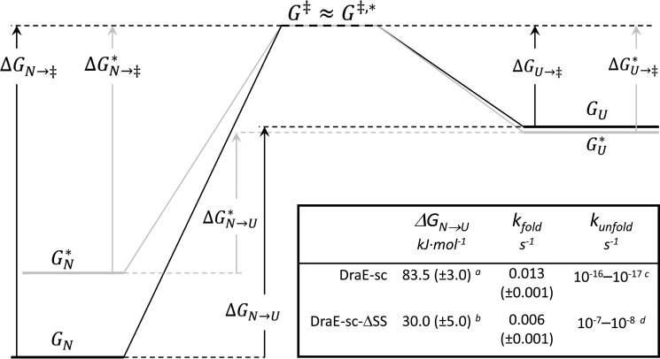 The free energy diagram of DraE-sc ( without asterisk , black lines ) and DraE-sc-ΔSS (with asterisk , gray lines ) folding/unfolding. N corresponds to native states of proteins, U corresponds to unfolded states, and ‡ corresponds to the transition state. Δ G N→ ‡ denotes the free energy barrier for unfolding, and Δ G U→‡ denotes the free energy barrier of folding. Inset , thermodynamic and kinetic parameters of DraE-sc and DraE-sc-ΔSS denaturation, determined or calculated for 25 °C. a , calculated on the basis of k unfold and k fold : Δ G N→U = − RTln ( k unfold / k fold ); b , value taken from Ref. 10 ; c , taken from Ref. 9 ; d , calculated on the basis of Δ G N→U and k fold : k unfold = k fold · exp (−Δ G N→U / RT ).