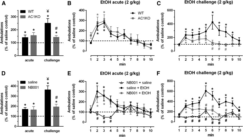 Intact acute, but absence of sensitized ethanol (EtOH) locomotor response in AC1KO mice (A–C), n = 6–7/group, and WT mice pretreated with the selective inhibitor NB001 (D–F), 10 mg/kg, n = 8–9/group. Average locomotor activity (A and D) and time course following acute (B and E) or challenge (C and F) EtOH (2.0 g/kg) after repeated home cage EtOH administration (2.5 g/kg, 10 injections). Data reported as percentage change relative to respective saline-only controls. WT EtOH-treated mice displayed an acute locomotor response relative to saline-only WT controls, which was significantly enhanced following sensitization. AC1KO and NB001-treated WT mice demonstrated a comparable acute locomotor response to WT EtOH controls, but failed to display a further potentiation in this response following sensitization. Locomotor activity on the acute and challenge day was unaltered by pretreatment with NB001 alone (NB001 + saline). Significance determined by two-way RM ANOVA and Sidak's post hoc test, * P ≤ 0.05, compared with respective saline-treated controls; ¥ P