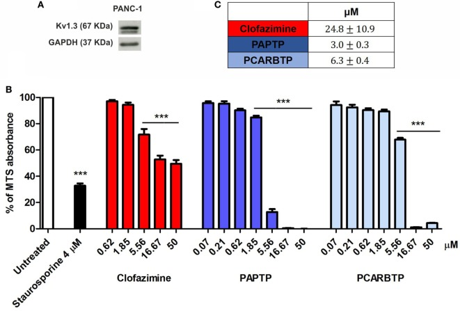 Potassium channel Kv1.3 is expressed in PANC-1 cells. (A) Kv1.3 expression was determined by Western Blot in PANC-1 cells. 60 µg of total protein extract were loaded into a SDS gel and blotted onto a polyvinylidene fluoride (PVDF) membrane. Kv1.3 band was evaluated by immunoblotting with a specific antibody. GAPDH was used as loading control. The blot is a representative image of three different observations. (B) Inhibition of mitochondrial Kv1.3 by different concentration of membrane permeant blockers resulted in a reduction of the MTS signal from PANC-1 cells. Values are reported as percentage respect to untreated sample ± SEM. All compounds were added for 24 h. Staurosporine was used as positive control ( n = 3; *** p