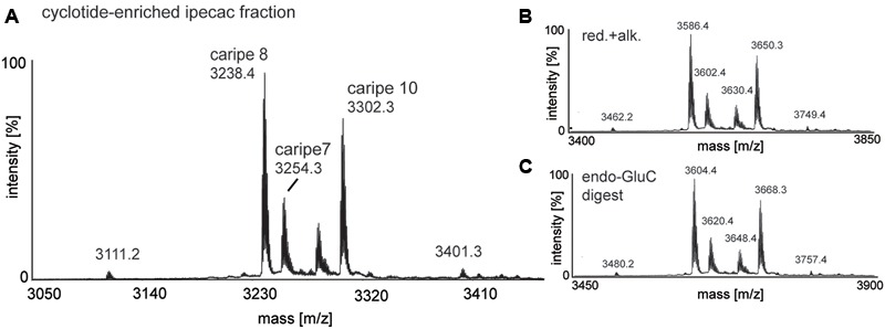 MALDI-TOF mass spectrometry (MS) of crude and chemically modified cyclotide-enriched extract. Mass spectra of (A) unmodified extract, (B) reduced and alkylated crude extract (red.+alk.) using dithiothreitol and iodoacetamide, and (C) endo-GluC digested extract are shown. Masses labeled in the spectra refer to monoisotopic [M+H] + and cyclotides are labeled according to Table 1 . Using this analysis workflow, circular peptides containing six cysteines typically exhibit a mass shift of +348 Da (red.+alk.) and +366 Da (endo-GluC).