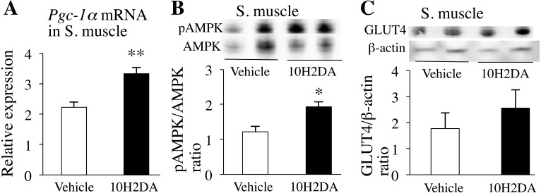 KK-Ay mice fasted overnight were sacrificed the next day after completing 10H2DA or vehicle administration. A: Relative pAMPK protein levels in skeletal muscles were determined by Western blotting (n=6). B: Relative mRNA expression levels of Pgc-1α in skeletal muscles (n=7–8) were quantified by qRT-PCR and normalized to the levels of Gapdh mRNA. C: Relative translocated GLUT4 protein levels in skeletal muscles were determined by Western blotting (n=6). Data are presented as the mean ± SEM. * P