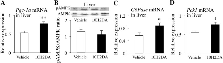 KK-Ay mice fasted overnight were sacrificed the next day after completing 10H2DA or vehicle administration. Relative mRNA expression levels of Pgc-1α in liver (n=7–8) (A), G6Pase in liver (n=7–8) (B) and Pck1 in liver (n=7–8) (C) were quantified by qRT-PCR and normalized to the levels of Gapdh mRNA. D: Relative pAMPK protein levels in liver (n=6) were determined by Western blotting. Data are presented as the mean ± SEM. * P