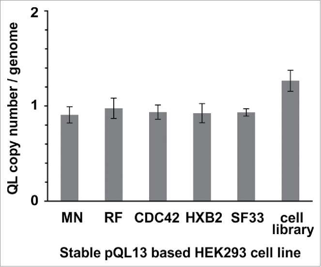 TaqMan® Copy Number assay of stable cell lines. Stable cell lines were generated using either separate transfection of each of the pQL13-based Env/V3 chimeras or a mixture of all 5 Env/V3 chimeras for transfection (HEK293 cell library). Relative copy numbers of integrated pQL13 plasmids were explored using a TaqMan Copy Number Assay on 4 individual samples of genomic DNA of each cell line and probing for eGFP in relation to the human telomerase reverse transcriptase (TERT) genes, resulting in an integration rate of 1 for each human cell line (differences between the 6 stable cell lines statistically n.s., p > 0.05).
