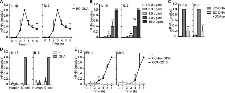 Dendritic cells produce type I IFN or cytokines in response to synthetic and microbial DNA. ( A , B , D , E ) mRNA analysis of monocyte-derived DCs stimulated with EC-DNA ( A , B , D ), human DNA ( D ), ODN-2216 or control ODN ( E ) for indicated time points was measured by real-time PCR, normalized to GAPDH and set as 1 in samples with the highest expression. ( C ) Similar as in ( A ), but EC-DNA was treated with DNAse before stimulation. Cells were stimulated with 10 μg/ml DNA or 5μM ODN in all experiments unless stated otherwise. Data are collated (mean ± s.d.) of four ( C ), three ( A , B ) or two ( D , E ) independent experiments with different donors *P