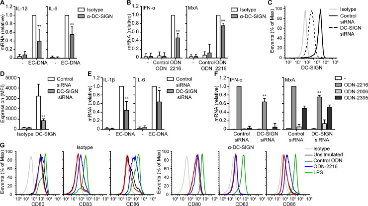 DC-SIGN facilitates microbial DNA induced responses. ( A , B,E,F ) mRNA analysis of monocyte-derived DCs stimulated with EC-DNA ( A,E ), ODN-2216 or control ODN ( B,F ) in the presence or absence of IgG1 isotype control or blocking antibodies against DC-SIGN ( A , B ) or after treatment with control or DC-SIGN siRNA ( E,F ) was measured by real-time PCR, normalized to GAPDH and set as 1 in samples with IgG1 isotype control or control siRNA. ( C , D ) DC-SIGN expression of monocyte-derived DCs after control or DC-SIGN siRNA treatment was measured by flow cytometry. ( G ) Expression of CD80, CD83 and CD86 expression by monocyte-derived DCs stimulated with control ODN or ODN-2216 in the presence or absence of IgG1 isotype control or blocking antibodies against DC-SIGN. Cells were stimulated with 10 μg/ml DNA or 5μM ODN in all experiments. Data are collated (mean ± s.d.) of six ( D ), four ( A,B, ) or three ( E,F ) independent experiments with different donors or are representative of six ( C ) or two ( G ) independent experiments with different donors. *P