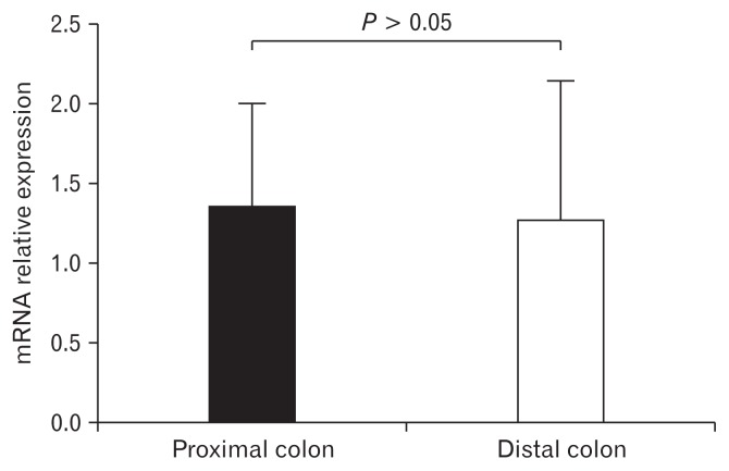 Expression levels of G protein-coupled bile acid receptor 1 (GpBAR1) between proximal and distal colon. The distribution of GpBAR1 was similar in both colon segments (n = 5).