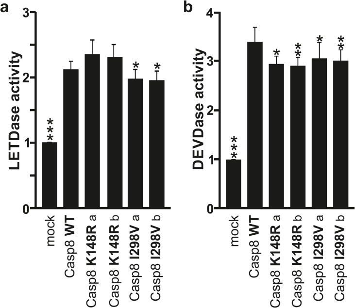 Caspase-8 enzymatic activity. SK-N-BE(2) cells were transfected with expression vectors encoding WT-, K148R-, or I298V-caspase-8 and mock as control. (A) Caspase-8 (LETDase) and (B) Caspase-3-like (DEVDase) activities were measured 24 h post-transfection. Data are presented as fold over mock untreated. Statistics and error bars: mean±s.d. n = 8 of biological replicates. Data was analyzed as comparison to Caspase-8 WT using two-sided student's t-test. *P