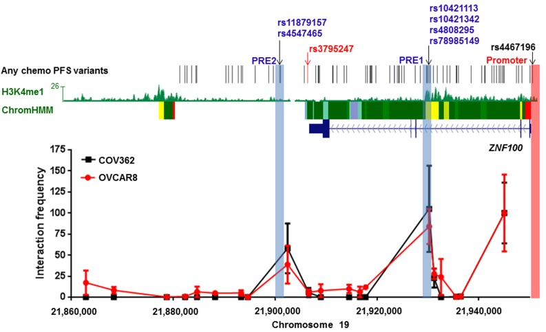 Two regions containing candidate all chemo PFS candidate variants interact with the ZNF100 promoter in ovarian cancer cell lines at the 19p12 outcome locus The figure shows 3C analyses of interactions between HindIII fragments and the ZNF100 promoter region (highlighted in pink) in COV362 and OVCAR8 cells. For each cell line, interaction frequencies were normalised to those of the fragment proximal to the promoter. Interaction frequencies from three independent biological replicates are shown (error bars represent standard error of the mean). The original variant associated with any chemotherapy PFS, rs3795247, is shown with correlated candidate outcome variants ( r 2 > 0.4) in black. Roadmap Consortium chromatin state segmentation for normal ovarian tissue using a Hidden Markov Model (Chrom HMM) is shown (red = active transcription start sites, dark green = weak transcription, green = strong transcription, green/yellow = genic enhancers, yellow = enhancers, aquamarine = ZNF gene repeats and turquoise = heterochromatin). H3K4Me1 modification in normal ovarian tissue is also indicated. Putative Regulatory Elements (PREs), and their coincident candidate variants, cloned into reporter gene constructs are highlighted in blue.