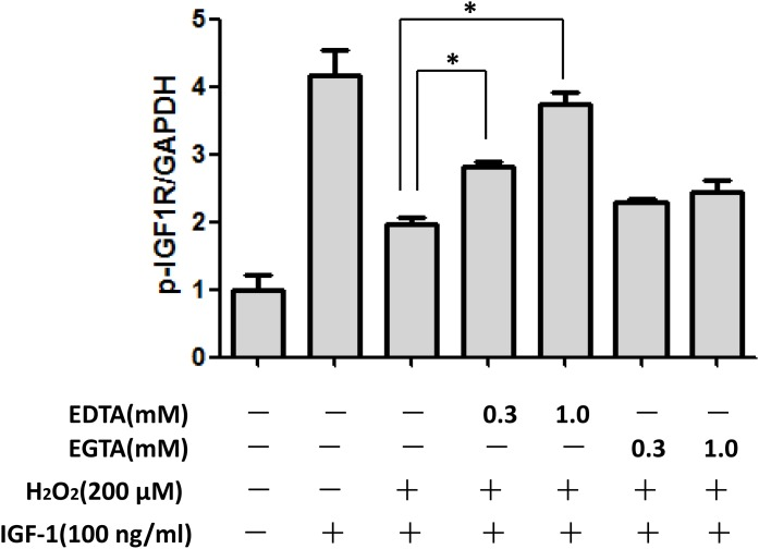 Extracellular Ca 2+ chelation EDTA rescued the inhibitory effect of H 2 O 2 on the pro-survival signaling of IGF-1 in SH-SY5Y cells SH-SY5Y cells were treated with Ca 2+ chelation EDTA or EGTA for 30min, followed by a treatment of H 2 O 2 (200μM) for 60min, and then stimulated by IGF-1for 10min. (a) Expression of phosphorylated IGF-1R, AKT and ERK1/2 was analyzed by western blot. (b) Relative levels of p-IGF1R versus GAPDH was determined by densitometry of the blots. Densitometric analysis of the western blot was expressed as a percentage of control. Results are shown as the mean ± SEM and represent three independent experiments. *p