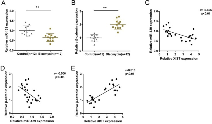 Expression of miR-139 and β-catenin and their correlations with XIST in tissues ( A ) and ( B ) miR-139 and β-catenin expression in PF and normal tissues were determined by using real-time PCR assays. The data are showed as mean ± SD of three independent experiments. ** P