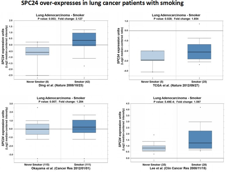<t>SPC24</t> over-expression is observed in lung tumors of whom the patients are smokers Oncomine boxed plots of SPC24 levels in lung adenocarcinomas from smokers vs. non-smokers. Four Oncomine expression analyses are shown.