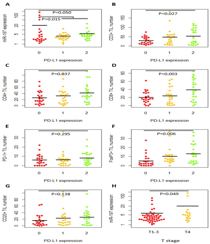 Dot plots of relative miR-197 expression level and tumor-infiltrating lymphocytes (TILs) according to PD-L1 expression and T stages MiR-197 expression level (A) and the numbers of CD3+ (B) , CD4+ (C) , CD8+ (D) , PD-1+ (E) , FoxP3+ (F) , and CD20+ (G) tumor-infiltrating lymphocytes (TILs) were illustrated according to PD-L1 level. PD-L1 expression is inversely correlated with miR-197 level (A) but tended to have a positive correlation with TILs (B–G). MiR-197 level is higher in T4 disease than in T1-T3 disease (H) .