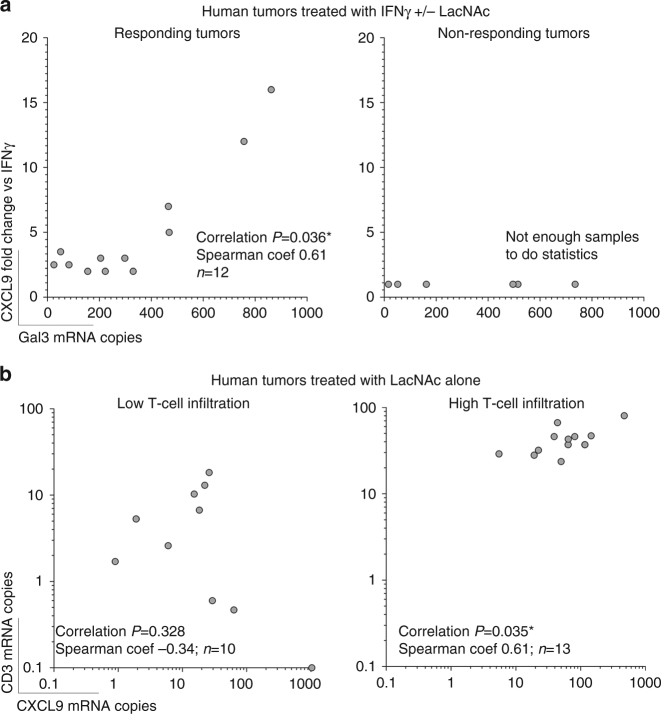 Correlation between CXCL9 induction and T-cell infiltration or galectin-3 expression in human tumor biopsies treated ex vivo with galectin antagonists. Samples corresponding to those of Table 1 . Correlation probabilities and non-parametric correlation coefficients are shown in each graph. a Correlation between CXCL9 induction (fold change induction in samples treated with IFNγ and LacNAc versus their corresponding samples treated with IFNγ alone) and galectin-3 expression in responding or non-responding tumors (having defined responding tumors such as those were CXCL9 fold change was at least two). b Correlation between CXCL9 and CD3 expressions in tumors treated with LacNAc alone and stratified depending on their T-cell infiltration. Tumors were considered as highly infiltrated if their CD3 expression was bigger than the average CD3 expression of all the tumor samples