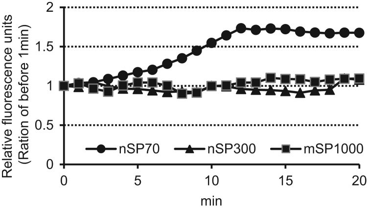 A typical image showing changes in intracellular calcium concentrations from SPs. Balb/3T3 cells were seeded at 2×10 3 cells/well in culture medium. After incubation for 24 h, the cells were pretreated with the Fluo-4 AM mixture for 30 min. The intensity of intracellular green fluorescence was observed from 1 min before until 20 min after treatment with 300 µg/mL SP using a FluoView FV1000 confocal laser scanning microscope. The fluorescence of Fluo-4 was excited at 473 nm, and emission was detected at 516 nm. nSP70, closed circle (•); nSP300, closed triangle (▲); and mSP1000, closed square (■). The assay was performed in 3–5 independent experiments.
