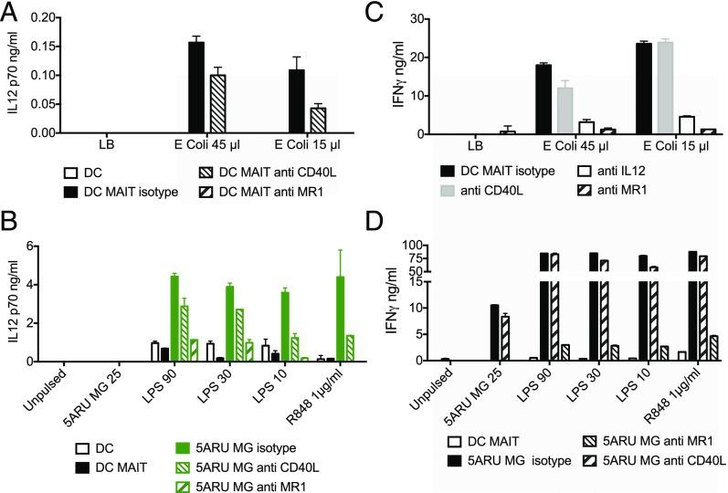 Synergy between human MAIT cell agonists and TLR agonists. ( A ) Bioactive <t>IL-12p70</t> in the supernatant of DCs pulsed with E. coli upernatant in the presence or absence of allogeneic MAIT cells and blocking anti-CD40L or anti-MR1 Abs. ( B ) Bioactive IL-12p70 in the supernatant of DCs pulsed with the indicated concentrations of 5-A-RU/MG (ng/ml), LPS (ng/ml), or R848 (μg/ml) in the presence or absence of allogeneic MAIT cells and blocking anti-CD40L or anti-MR1 Abs. ( C ) IFN-γ levels in the supernatant of MAIT-allogeneic DC cocultures pulsed with E. coli supernatant in the presence or absence of blocking anti-CD40L, anti–IL-12, or anti-MR1 Abs. ( D ) IFN-γ levels in the supernatant of MAIT–allogeneic DC cocultures pulsed with the indicated concentrations of 5-A-RU/MG (ng/ml), LPS (ng/ml), or R848 (μg/ml) in the presence or absence of blocking anti-CD40L or anti-MR1 Abs. Data are from one experiment representative of four; data are mean ± SD. Two more donors are shown in Supplemental Fig. 2 .