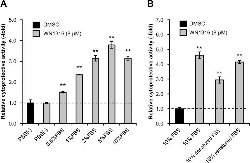 Protein factors in FBS exert WN1316-mediated cytoprotective activity. (A) Effect of FBS on WN1316-induced cytoprotection. Differentiated SH-SY5Y cells were treated with 8 μM WN1316 or DMSO for 3 h followed by 12 h of chase incubation without the compound, and then exposed to 40 μM menadione for 4 h. The cell viability was measured by AlamarBlue assay, and was expressed as a relative value (relative cytoprotective activity; -fold) of the WN1316-treated samples for vehicle control (DMSO) set as 1. Data are expressed as mean ± SD (n = 4). Statistical significance was evaluated by one-way ANOVA ( p