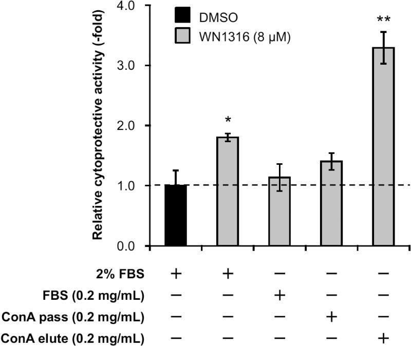 N -linked glycoproteins exert WN1316-mediated cytoprotective activity. Differentiated SH-SY5Y cells were pretreated with 8 μM WN1316 in DMEM containing 0.2 mg/ml FBS, Con A pass, or Con A elute for 3 h followed by 12 h of chase incubation without the compound, and then exposed to 40 μM menadione for 4 h. As control experiments, differentiated SH-SY5Y cells were treated with 8 μM WN1316 (as a positive control) or DMSO (as a vehicle control) in DMEM supplemented with 2% FBS (corresponds to a protein concentration of approximately 0.5 mg/ml). The cell viability was calculated by AlamarBlue, and was expressed as a relative value (relative cytoprotective activity; -fold) of the WN1316-treated samples for vehicle control (DMSO) set as 1. Data are expressed as mean ± SD (n = 4). Statistical significance was evaluated by one-way ANOVA ( p