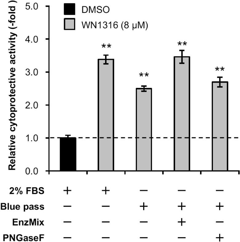 Deglycosylation does not affect WN1316-mediated cytoprotective activity. Differentiated SH-SY5Y cells were pretreated with 8 μM WN1316 in DMEM containing 0.28 mg/ml Blue pass treated with or without EnzMix and PNGaseF for 3 h followed by 12 h of chase incubation without the compound, and then exposed to 40 μM menadione for 4 h. As control experiments, differentiated SH-SY5Y cells were treated with 8 μM WN1316 (as a positive control) or DMSO (as a vehicle control) in DMEM supplemented with 2% FBS (corresponds to a protein concentration of approximately 0.5 mg/ml). The cell viability was calculated by AlamarBlue, and was expressed as a relative value (relative cytoprotective activity; -fold) of the WN1316-treated samples for vehicle control (DMSO) set as 1. Data are expressed as mean ± SD (n = 4). Statistical significance was evaluated by one-way ANOVA ( p