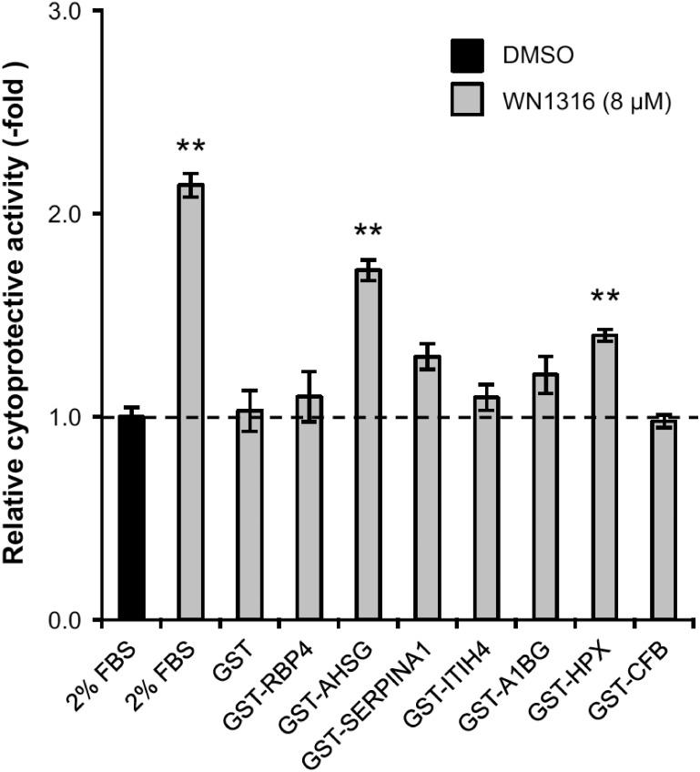 Human WN1316-activating factors exert WN1316-mediated cytoprotective activity. Differentiated SH-SY5Y cells were treated with 8 μM WN1316 in the presence of purified GST-fusion proteins for 3 h followed by 12 h of chase incubation without the compound, and then exposed to 40 μM menadione for 4 h. Concentrations of the GST-fusion proteins used are as follows; GST; 4.4 μg/ml, GST-RBP4; 2.2 μg/ml, GST-AHSG; 1.9 μg/ml, GST- SERPINA1; 2.4 μg/ml, GST-ITIH4; 2.3 μg/ml, GST-A1BG; 1.5 μg/ml, GST-HPX; 1.7 μg/ml, GST-CFB; 3.3 μg/ml. As control experiments, differentiated SH-SY5Y cells were treated with 8 μM WN1316 (as a positive control) or DMSO (as a vehicle control) in DMEM supplemented with 2% FBS (corresponds to a protein concentration of approximately 0.5 mg/ml). The cell viability was calculated by AlamarBlue, and was expressed as a relative value (relative cytoprotective activity; -fold) of the WN1316-treated samples for vehicle control (DMSO) set as 1. Data are expressed as mean ± SD (n = 4). Statistical significance was evaluated by one-way ANOVA ( p