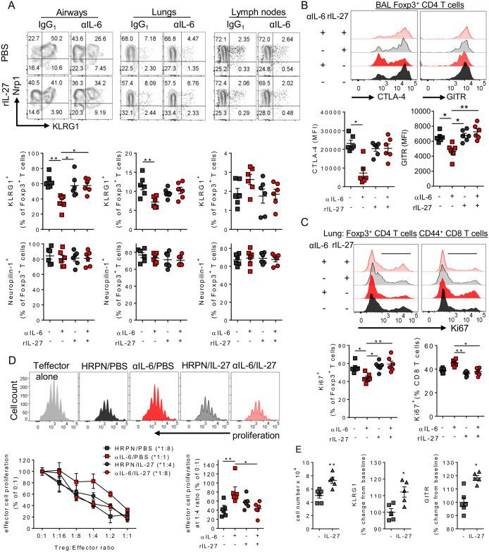 """An IL-6/IL-27 dependent pathway matures regulatory T cells after RSV infection. 8 week old BALB/c female mice were infected with 8 x 10 5 ffu of RSV A2 and dosed with either αIL-6 or isotype control antibody i.p. between days -1 and 3 p.i. (A) Treg expression of KLRG1 and Neuropilin alongside (B) CTLA-4 and GITR in the airways and (C) Ki67 expression in the lungs. (D) CD4 + GITR + CD25 + Tregs were FACS isolated from BAL and lungs at day 4 p.i. and co-cultured in increasing concentrations with proliferation dye stained, activated naïve splenic CD4 + T cells for 5 days. Proliferation of these """"effector"""" T cells, relative to effector CD4 T cells cultured without Tregs, was then calculated. Representative plots from the 1:4 Treg:Effector cell ratio are depicted. The dilution at which Tregs from each condition significantly suppressed effector cells compared to effector cells on their own is shown in brackets in the legend. (E) CD25 + splenic Tregs were activated in vitro with αCD3/28 in the presence or absence of 50 ng/ml of rIL-27 and KLRG1 and GITR expression were measured 48 hours later. (A-D) Data represents n = 6 mice pooled from 2 independent repeats. (E) represents 5 mice from 3 independent experiments."""