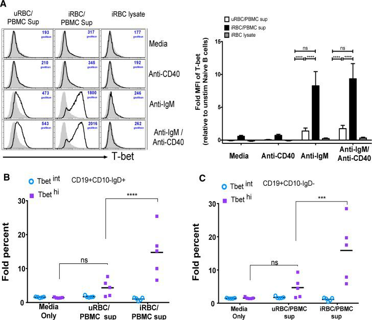 Supernatants of PBMCs stimulated with P . falciparum -infected RBCs plus BCR cross-linking drive T-bet expression in B cells. ( A-C ) PBMCs of healthy U.S. adults (n = 5) were stimulated in vitro with P . falciparum -infected red blood cell (iRBC) lysate or uninfected red blood cell (uRBC) lysate for 3 days. The resulting supernatants or the iRBC lysate alone were transferred to PBMCs from the same U.S. adults (n = 5) in the presence of media alone, anti-IgM, anti-CD40, or both, followed by staining for T-bet, CD10, CD19 and IgD. ( A ) Fold change in T-bet MFI in stimulated naïve B cells relative to unstimulated naïve B cells (left, representative histograms). Fold change in percentage of T-bet intermediate (T-bet int ) and T-bet high (T-bet hi ) ( B ) naïve B cells and ( C ) memory B cells after BCR cross-linking with anti-IgM/G/A in the presence of media alone, uRBC/PBMC supernatant or iRBC/PBMC supernatant, relative to unstimulated cells. Horizontal bars and whiskers represent means or median and SE. p values were determined by paired Student's t test with Bonferroni adjustments where appropriate. **** P
