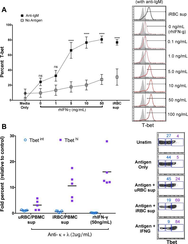 T-bet expression in naïve B cells in the presence of supernatant of iRBC-stimulated PBMCs or increasing concentrations of IFN-γ with or without BCR crosslinking. ( A ) T-bet expression in naïve B cells (n = 5 U.S. adults) with or without BCR crosslinking in the presence of supernatant of iRBC-stimulated PBMCs, or in the presence of increasing concentrations of recombinant human IFN-γ (right, representative histograms). ( B ) Intermediate and high T-bet expression in naïve B cells (n = 5 U.S. adults) after BCR cross-linking in the presence of iRBC-stimulated PBMC supernatant or rhIFN-γ (right, representative histograms). Horizontal bars and whiskers represent means or median and SE. p values were determined by paired Student's t test with Bonferroni adjustments where appropriate. **** P