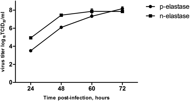 Growth Kinetic of Modified NS 116 -GFP/AE Virus A 24-hr-old monolayer of Vero cells was infected with NS 116 -GFP/AE virus in the presence of either pancreatic elastase (p-elastase) or neutrophil elastase (n-elastase). A viral titer was determined by TCID 50 in Vero cells at the indicated time points + SEM (n = 6).