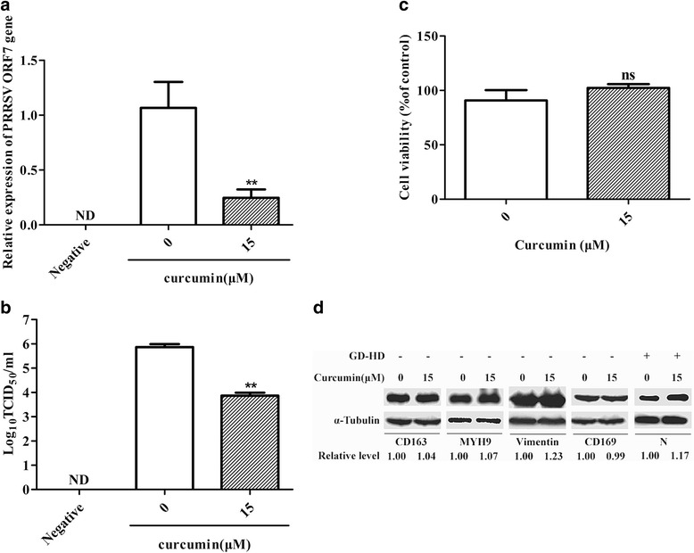 Evaluation of the effect of curcumin on PRRSV entry and levels of receptors in PAMs. Treatment of PAMs was performed as in Fig. 1 . After incubation for 36 h, total cellular <t>RNA</t> was extracted and PRRSV ORF7 RNA levels were detected by <t>qRT-PCR</t> ( a ). Culture supernatants were tested for virus titers ( b ). Curcumin cytotoxicity was detected in PAMs using a CCK8 assay and is presented as experimental cell viability relative to cell viability of untreated control (100%) ( c ). PAMs were incubated with curcumin (15 μM) at 37 °C for 1 h and CD163, MYH9, vimentin, and CD169 protein levels were detected by western blot. In addition, PAMs were incubated with curcumin at 37 °C for 1 h and then the cells were infected with PRRSV GD-HD strain (MOI: 0.1). After 36 h, PRRSV N protein expression levels were determined by western blot ( d ). Each value represents the mean ± SD from three independent experiments (*, p