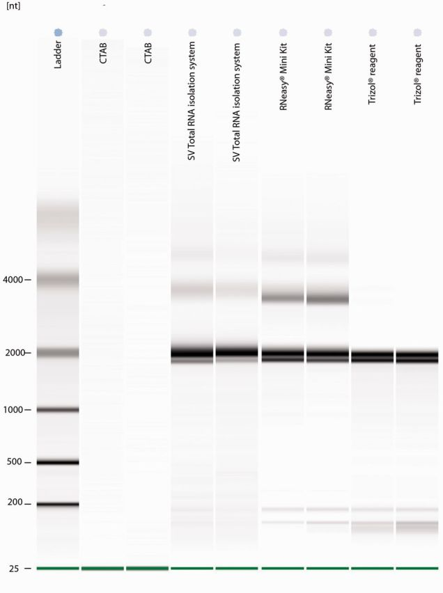 Pseudo-gel image produced using an Agilent 2100 Bioanalyser, showing the results of RNA extracted from T. leucotreta using the RNeasy Mini Kit, a CTAB-based protocol, TRIzol reagent, and the SV Total RNA kit. The 18S RNA subunit is visible at 2,000 nt, the 28S large subunit at 3,800 nt, and a combination of 5S, 5.8S, and tRNAs at ± 180 nt.