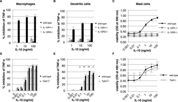 IL-10R2 mediated signaling via Tyk2 plays a limited role in IL-10 activity. Bone marrow-derived macrophages, dendritic cells and mast cells from wild-type, IL-10R1 -/- , IL-10R2 -/- and Tyk2 -/- mice were tested for their response to IL-10. Macrophages and dendritic cells from wild-type and IL-10R -/- mice were pre-treated with IL-10 and subsequently stimulated with 100 ng/ml LPS. The percentage of inhibition of TNF-α expression of macrophages and dendritic cells was determined after overnight incubation (A and B, respectively) ( n = 3, error bars indicate standard error). Similarly, macrophages and dendritic cells from Tyk2 -/- mice were tested for their response to IL-10 (D and E, respectively) ( n = 4, error bars indicate standard error). Mast cells from wild-type and transgenic mice were cultured for 48 hours in the presence of IL-10 and cell viability was determined (C and F) ( n = 3 for IL-10R -/- mice and n = 4 for Tyk2 -/- mice, error bars indicate standard error). Asterisk(s) indicate significant differences as determined by a Welch's t -test (* P