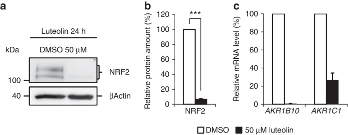 Downregulation of NRF2 induced by luteolin. a Representative western blot of endogenous level of NRF2 in whole protein lysates of treated human primary fibroblast of patient 1. NRF2 p.T80K mutant cells were exposed to 50 µM luteolin or DMSO for 24 h. Full blots are shown in Supplementary Fig. 7 . b Quantitative analysis of western blot images illustrating the endogenous level of NRF2 relative normalized to ACTB and DMSO treated cells. Data are given as means ± SEM, n = 3 independent experiments. Statistical differences were obtained with unpaired Welch's t -test: *** p ≤ 0.001. c qRT–PCR analysis of AKR1B10 and AKR1C1 gene expression in primary fibroblasts of patient 1 treated with 50 µM luteolin or DMSO for 24 h. Expression is normalized to that of GAPDH . % of mRNA is equal to 2 −∆∆CT and normalized relative to DMSO. Data are given as means ± SEM, n = 2 independent experiments