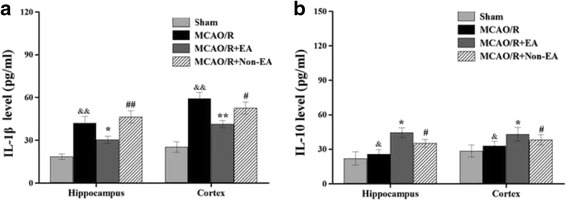 Effects of EA on inflammatory cytokines levels in the peri-infarct hippocampal CA1and sensorimotor cortex of MCAO/R rats. a Representative and quantitative analysis of <t>ELISA</t> showed that EA treatment for 7 days decreased the levels of <t>IL-1β</t> and b increased the levels of IL-10 in MCAO/R injured rats. Data are presented as mean ± S.E.M. from 6 individual rats in each group. P