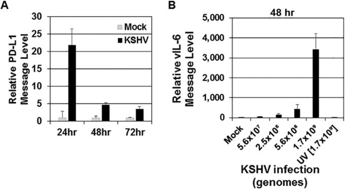 Levels of PD-L1 transcripts increase following KSHV infection. Human monocytes (5 × 10 6 monocytes/well) were infected with KSHV (1 × 10 9 genomes/well) (A and B) or UV-inactivated KSHV (B) for 24, 48, or 72 h. Total KSHV genomes were calculated prior to infection for panel B, and different amounts of KSHV genomes per well (5.6 × 10 7 , 2.5 × 10 8 , 5.6 × 10 8 , and 1.7 × 10 9 ) were used. UV-inactivated KSHV genomes used were 1.7 × 10 9 per well. At each time point, a mock-infected control was also harvested. After harvest, RNA was isolated from cells and reverse transcribed, and cDNA levels were measured through quantitative real-time PCR to assess either PD-L1 (A) or KSHV-encoded viral interleukin-6 (vIL-6) (B) message levels. RNA levels were normalized to β-actin and are represented as fold increase over mock-infected values at each time point. The data are representative plots of single experiments but represent the general trend of 11 donors for PD-L1 (24 hpi) transcript levels and 5 donors for vIL-6 (48 hpi) transcript levels. Error bars represent standard deviations of the fold change values for three technical replicates.
