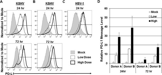 Increase in PD-L1 expression is dose dependent. Primary human monocytes (5 × 10 6 monocytes/well) were infected with a low dose of KSHV (3 × 10 8 genomes/well) or a high dose of KSHV (2.1 × 10 9 genomes/well) or mock infected and harvested at 24 and 72 h postinfection. (A and B) Cells were stained for CD14 and PD-L1, and expression of these markers was measured by flow cytometry. Cells were gated on forward scatter, side scatter, and CD14 + . Histograms indicate the gate of PD-L1-positive cells with percentages for mock-infected cells, low dose of KSHV-infected cells, and high dose of KSHV-infected cells shown. Panels A and B show representative data from donors from seven independent experiments. (C) Monocytes from a donor were infected with low-dose HSV-1 (MOI of 0.02) and high-dose HSV-1 (MOI of 0.2). (D) RNA was isolated from mock- and KSHV-infected cells and reverse transcribed, and cDNA levels were measured through quantitative real-time PCR to assess PD-L1 message levels. RNA levels were normalized to β-actin and represented as fold increase over the values for mock-infected monocytes. Error bars represent standard deviations of the fold changes for three technical replicates. The data are representative of the general trend of seven independent donor experiments.