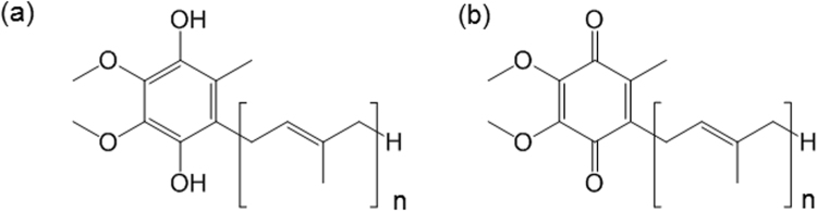 Chemical structures of ubiquinol ( a ) and the oxidized form of coenzyme Q10 (n=10) and coenzyme Q9 (n=9) ( b ).