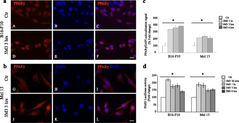 Analysis of PPARγ translocation into the nucleus and activity in response to 3 M3 exposure. ( a , b , c ) Immunofluorescence analysis of PPARγ localization in untreated cells ( A - C , G - I ) and in cells treated with 15 μM 3 M3 for 3 h ( D - F , J - L ). Immunolabeling with anti-PPARγ antibody and nuclear staining with DAPI. Scale bar: 20 μM. ( c ) Quantitative analysis of the PPARγ/DAPI colocalization signal in the nucleus. Results are express as fold increase of colocalization signal with respect to the values obtained in untreated cells and are reported as mean value ± SD (%) (* p