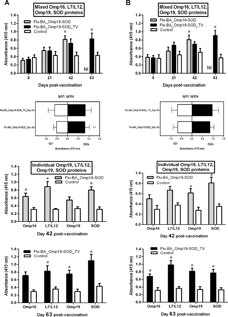 <t>IgG,</t> <t>IgG1</t> and <t>IgG2a</t> antibody responses against total mixed and individual Brucella L7/L12, Omp16, Omp19 and SOD proteins in pregnant sheep (A) and goats (B) at 0, 21, 42, 63 days post-vaccination (DPV) by ELISA. Pregnant sheep and goats in the group I (Flu-BA_Omp19-SOD) were immunized twice concurrently via the subcutaneous and conjunctival routes at an interval of 21 days with vaccines generated from the influenza viral vectors (IVV) subtypes H5N1 (prime vaccination) and H1N1 (booster vaccination). The vaccination of animals of group II (Flu-BA_Omp19-SOD_TV) was carried out in the same way as in group I, but only the vaccine generated from IVV subtypes H5N1 was used, which was administered three times at 21 days intervals. Sheep and goats in the negative control group (IV) were vaccinated with 20% Montanide Gel01 adjuvant in PBS three times at 21 days intervals. Data are presented as optical density (OD) ± standard deviations; * P = 0 . 04 to P