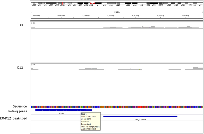 Distribution of H3K27me3 mark on OCT4. Binding profile of H3K27me3 mark on the OCT4 gene during cardiac differentiation generated by IGV genome browser mapped to human hg 19 genome.