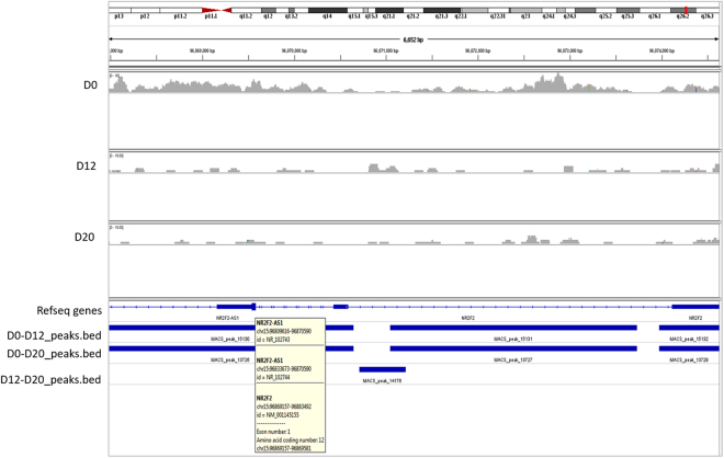 Distribution of H3K27me3 mark on NR2F2. Occupancy of H3K27me3 mark on the NR2F2 locus at days 0, 12 and 20 generated by IGV gene browser mapped to human hg 19 genome.