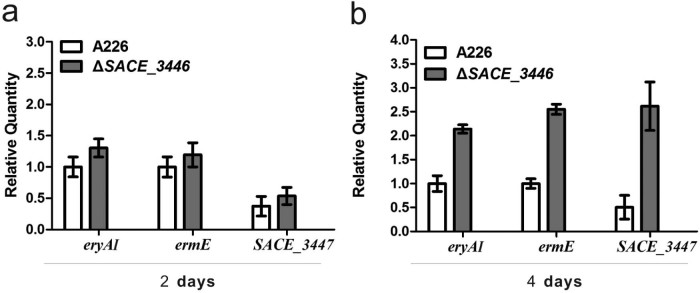 Effects of SACE_3446 disruption on the transcription of eryAI , ermE , and SACE_3447 . qRT-PCR was used to quantify the amounts of transcripts produced by A226 and Δ SACE_3446 cultured for 2 days (a) and 4 days (b). The mean values of three independent experiments are shown, with the standard deviation indicated by error bars.