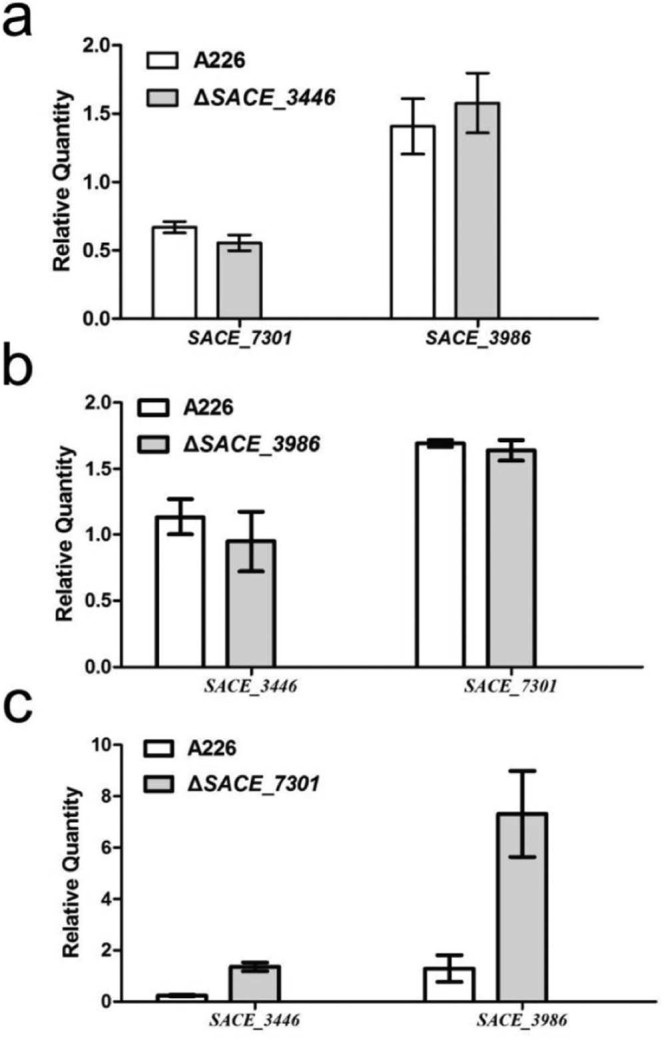 SACE_7301 indirectly regulated the transcriptions of SACE_3446 and SACE_3986 . Gene transcription was compared between A226 and deletion mutants of three TetR family genes ( SACE_3446 , SACE_3986 , and SACE_7301 ) cultured for 4 days via qRT-PCR assay. (a) Effects of SACE_3446 disruption on the transcriptions of SACE_3986 and SACE_7301 . (b) Effects of SACE_3986 disruption on the transcriptions of SACE_3446 and SACE_7301 . (c) Effects of SACE_7301 disruption on the transcriptions of SACE_3446 and SACE_3986 . The mean values of three independent experiments are shown, with the standard deviation indicated by error bars.